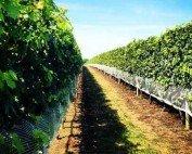 Vineyard Tours in Long Island