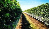 Vineyard Tours in Long Island